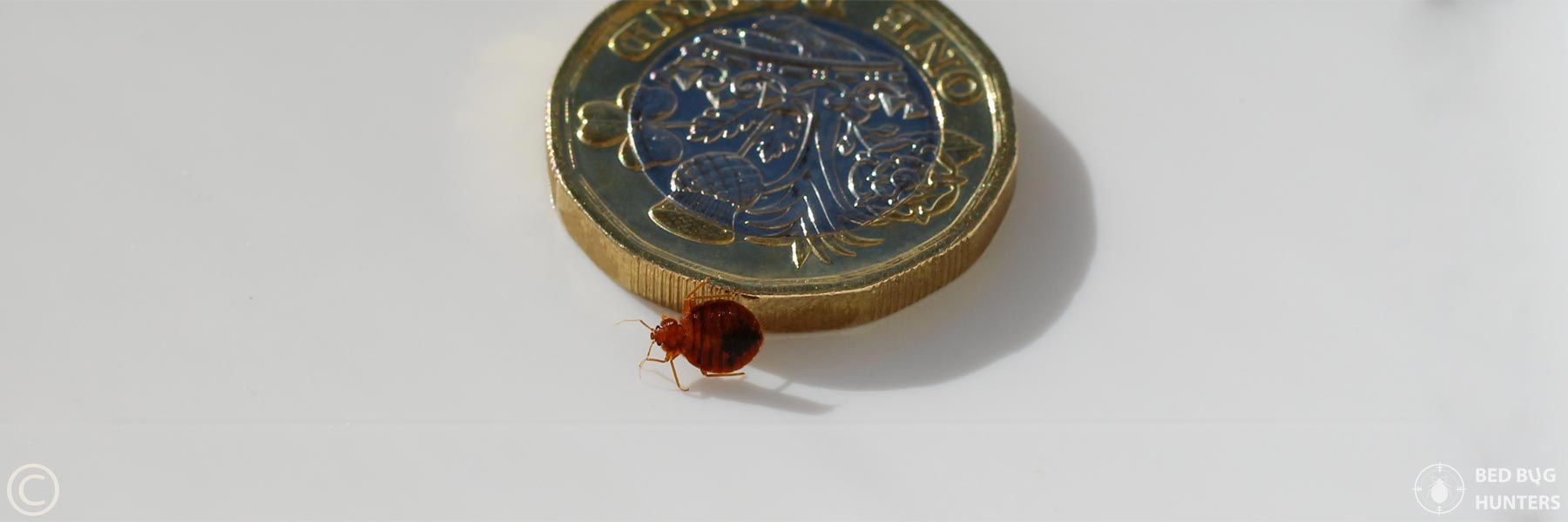 Prices Bed Bugs Pest Control Company In London Providing