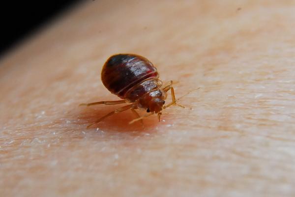 bed-bug-control-max-05