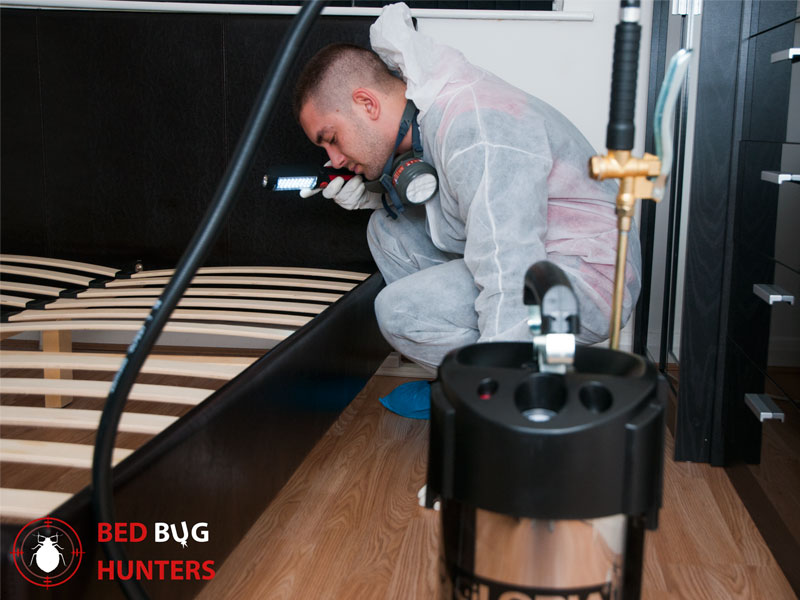 Inspection for bed bugs in London
