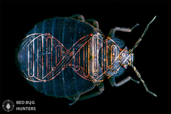 bed-bug-evolved-dna-blue-xs