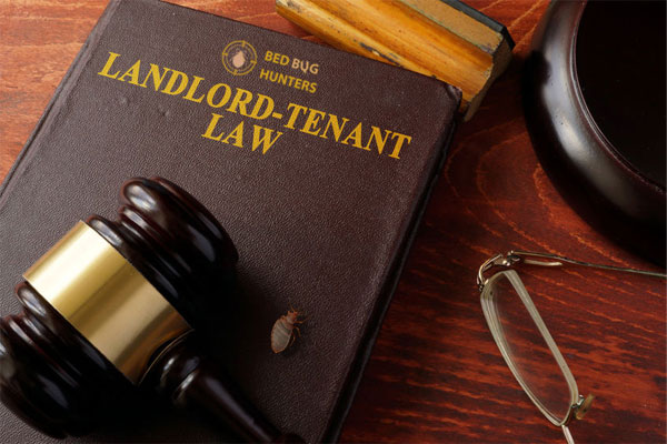 Tenants, landlords and bed bug infestations in the UK
